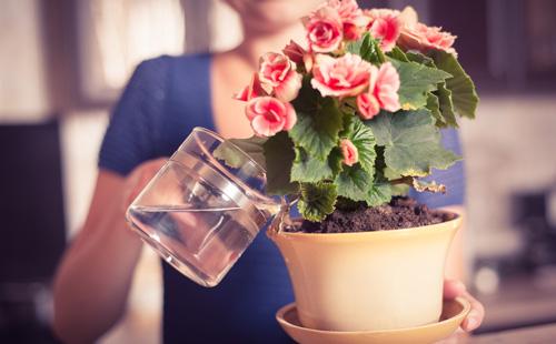 полив комнатных цветов янтарной кислотой пропорции